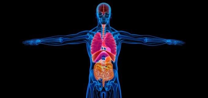 10 formas en que el alcohol afecta tu cuerpo - Blue Cross ...